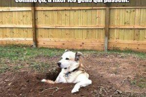 Mon chien aime creuser des trous dans le jardin, ensuite il se pose dedans...