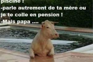 Papa y a une vache dans la piscine !