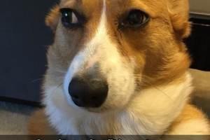 Quand ton maître dit à un autre chien c'est un bon toutou