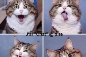 Quand un chat prend des selfies