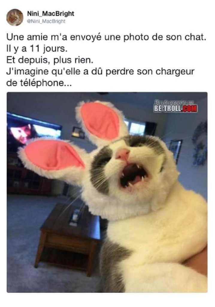 Une amie m'a envoyé une photo de son chat