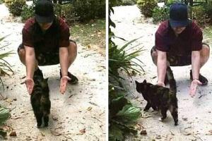 La réaction émotionnelle d'un chat après avoir vu son maître