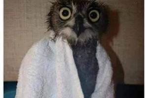 Quand tu te regardes dans le miroir chez le coiffeur