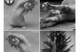Ton chat quand tu fais le sapin de noël