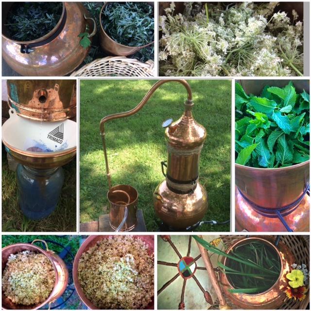 Envi Botanicals Process