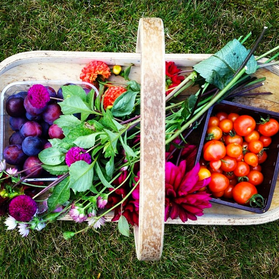 A colourful harvest of good stuff.