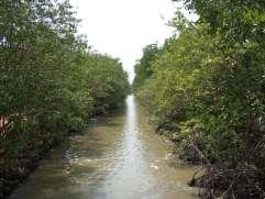 カンザーのマングローブ林