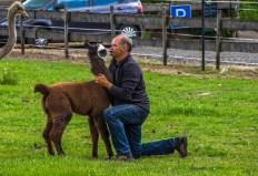 Kalli mit dem kleinen Alpaka
