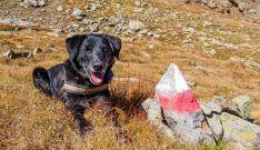 Cosmo, der Bergwanderer