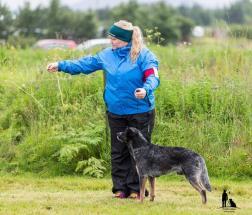 Hundasýning 23.07.2016 Víðidal nr 2 119