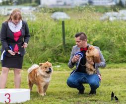 Hundasýning 23.07.2016 Víðidal nr 2 247