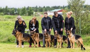 Hundasýning 23.07.2016 Víðidal nr 2 487