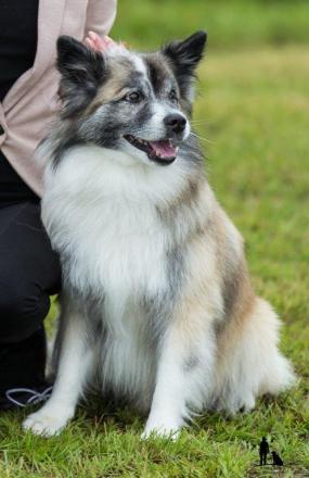 Hundasýning 23.07.2016 Víðidal nr 2 521