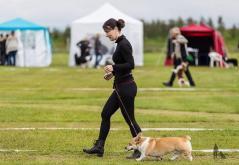 Hundasýning 24.07.2016 í Víðidalnum 069
