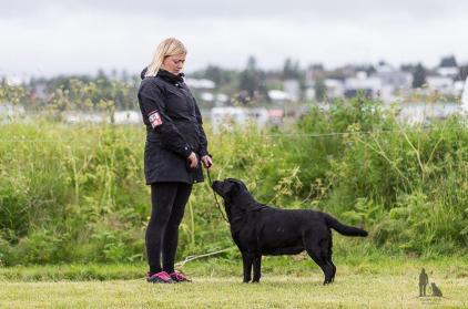 Hundasýning 24.07.2016 í Víðidalnum 1012 - Copy - Copy