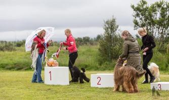 Hundasýning 24.07.2016 í Víðidalnum 1023