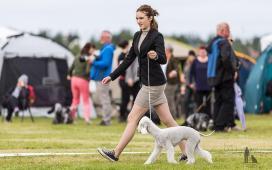 Hundasýning 24.07.2016 í Víðidalnum 265