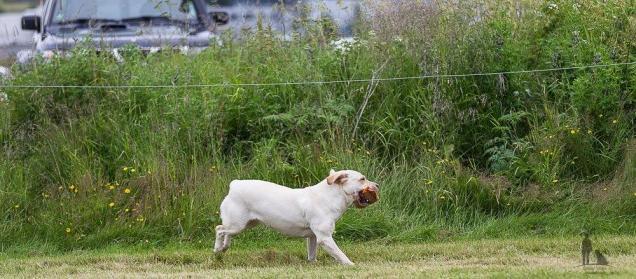 Hundasýning 24.07.2016 í Víðidalnum 704