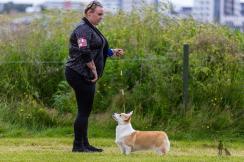 Hundasýning 24.07.2016 í Víðidalnum 786