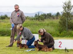 Hundasýning 24.07.2016 í Víðidalnum 819