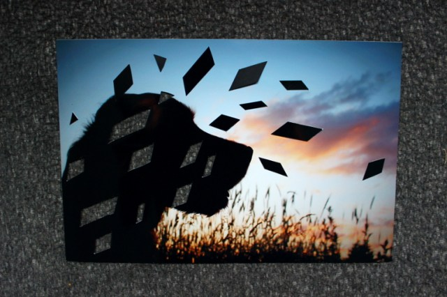 Rautenschnipsel des DIY Hundephotos