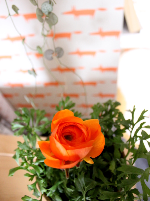orangefarbene Ranunkel