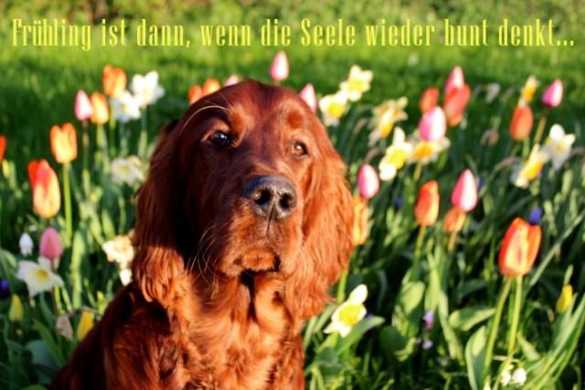Fruehlingsphoto mit einem Hund in einem Tulpenmeer