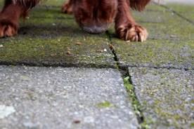Hund hat Hunde Milchschnitte aufgegessen
