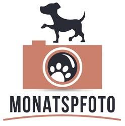 Logo des Montatspfotos