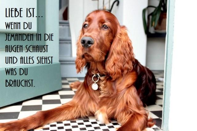 Spruchbild mit Hund der in einer Eingangstür liegt und in die Ferne blickt