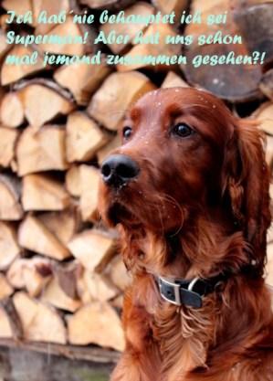 Spruchbild aus einem Bild mit Hund selbstgemacht