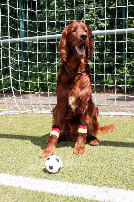Hund mit Deutschlandstulpen