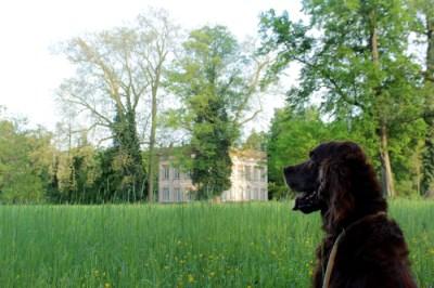 Irischer Setter schaut auf ein Schloss im Park Schönbusch