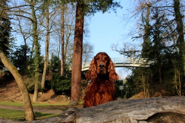 Park Schönbusch Aschaffenburg Ausflug mit Hund an der Leine