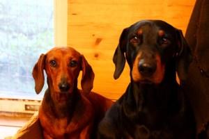 Wooddogs Anton und Bosse