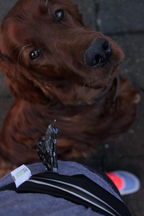 Kackatütchen mit Hund im Hintergrund