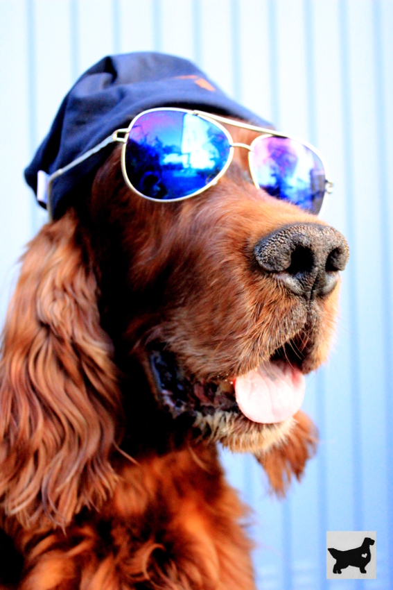Tag der Sonnenbrille