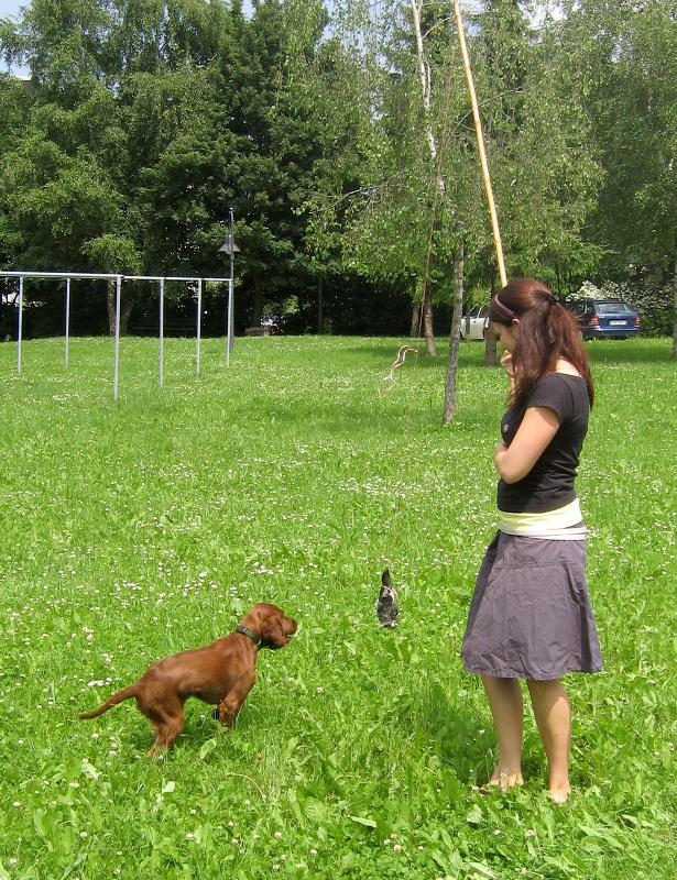 Reizangel Dummytraining Hundetraining