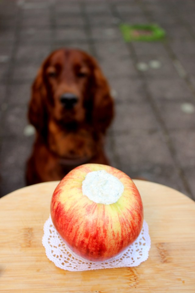 Barfleckerli Apfelrezept für Hunde Leckerli selbermachen Rezept Barfen