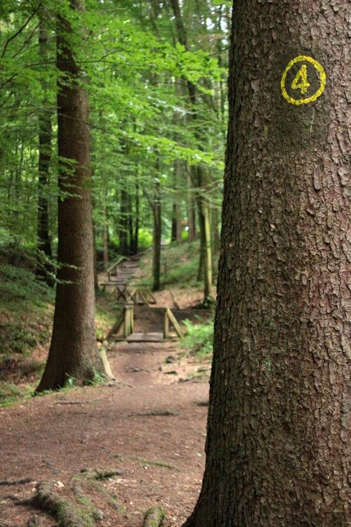 Wandern Obrunnschlucht Ausflugsziel Odenwald Ausflug mit Hund