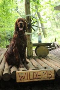 Wandern mit Hund Odenwald Hundeausflug mit Kind Sonntagsausflug
