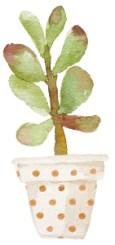 succulent arrangement 7