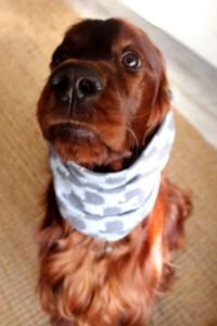 hund-mit-snood-hundeaccessoires-setter-blog