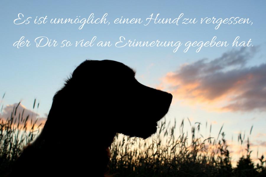 Trauer um den hund