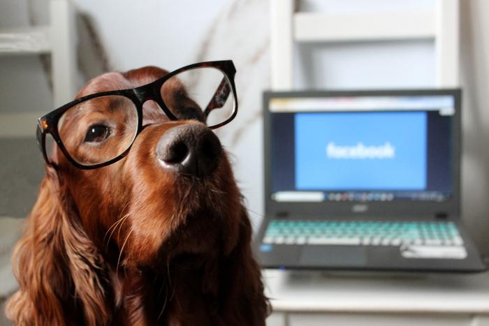 Facebook Hundegruppen - wo Du tatsächlich etwas dazulernst
