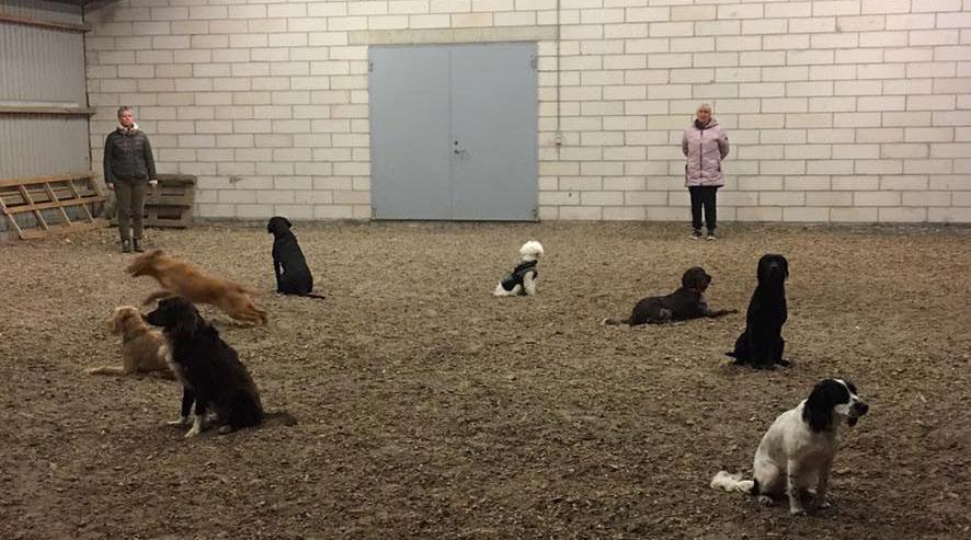 Ridehustræning Hundetræning