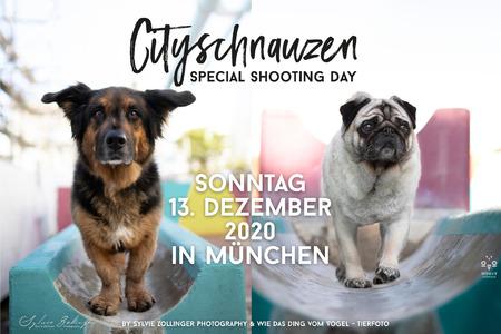 Header Cityschnauzen No2