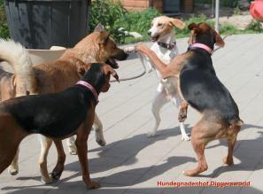 Hunde haben Spaß