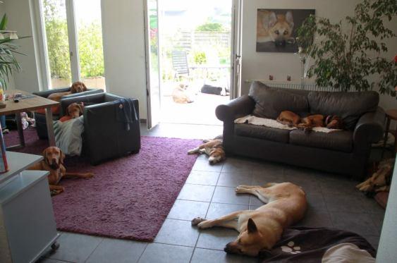 Entspannte Lage im Wohnzimmer
