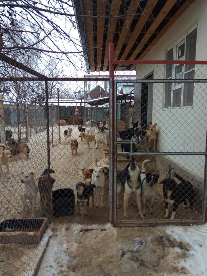 600 Hunde in Lipezk brauchen Hilfe
